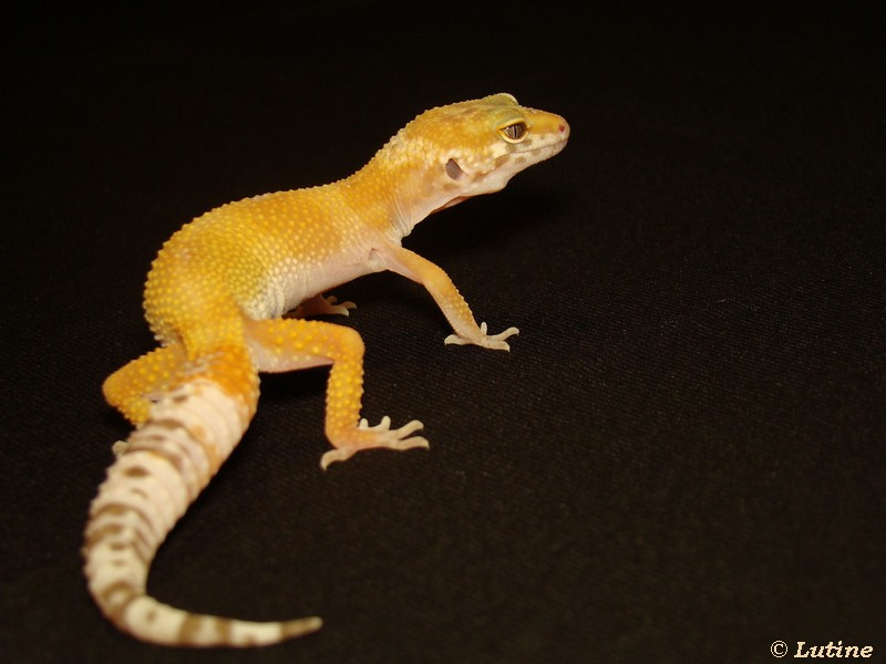 Geckos et Chlamy - Page 2 APTOR01