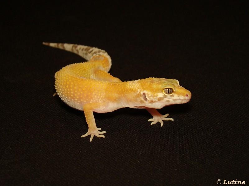 Geckos et Chlamy - Page 2 APTOR02