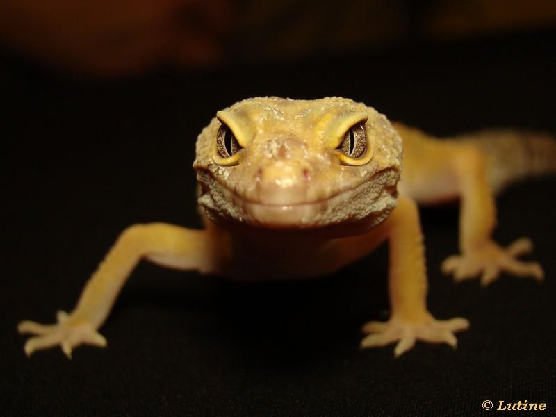 Geckos et Chlamy - Page 2 Orph%e9e01